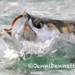 Florida tarpon fishing, tarpon fishing charters