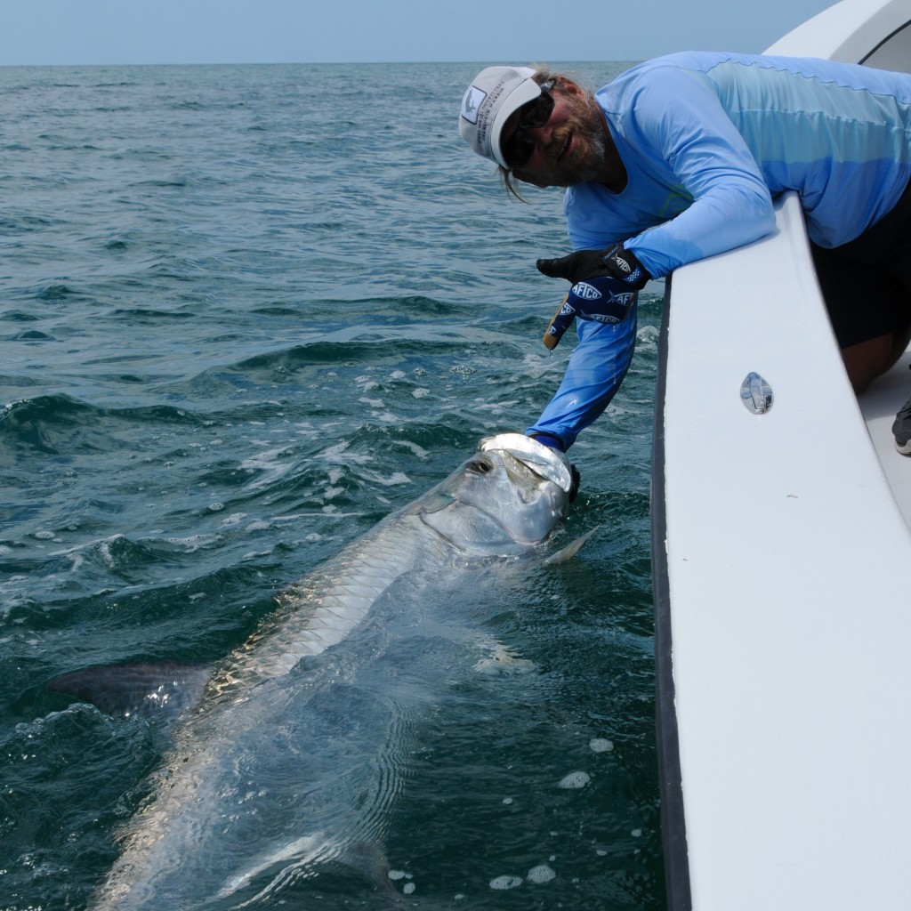 Florida tarpon fishing charters2015 tarpon season archives for Florida tarpon fishing